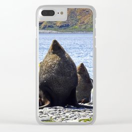 Fur Seal Resting Clear iPhone Case
