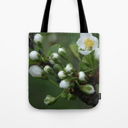 Plum tree flower buds 2 Tote Bag