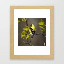 Goldfinch in Song Framed Art Print