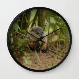 Baby Woodchuck Snacking Wall Clock