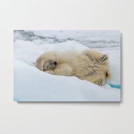 Polar bear with head in paws Metal Print