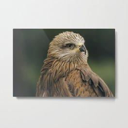 Power Bird II Metal Print