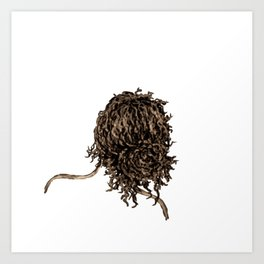Messy dry curly hair 5 Art Print