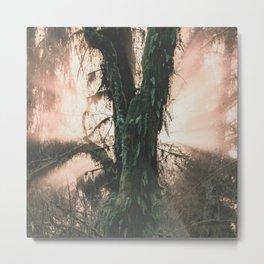 Rainforest Revelation Metal Print