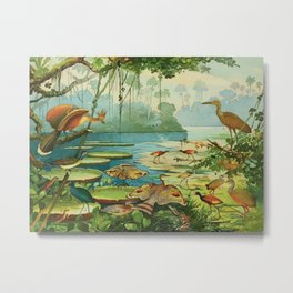 Amazonian birds by Göldi & Emil 1859-1917 Belem Brazil Colorful Tropical Birds Metal Print