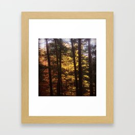Autumn Along the Gorge Framed Art Print