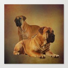 Boerboel - South African Mastiff Canvas Print