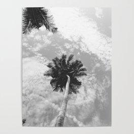 Palm Tree, San Blas Islands, Panama, Black & White Poster