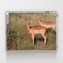 Boys Looking for Girls Laptop & iPad Skin