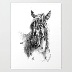 Leopard Spotted Horse portrait sk127 Art Print