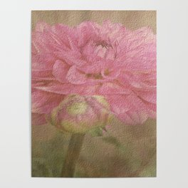 Soft Graceful Pink Painted Dahlia Poster