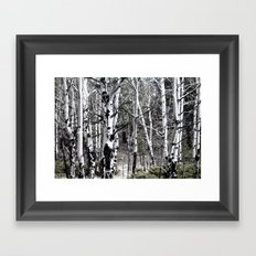 Aspen Trees with Subdued Colors Framed Art Print