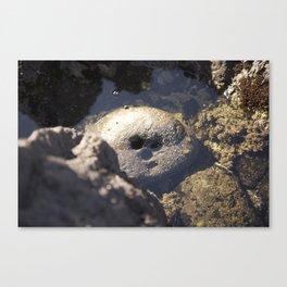 Smiling Rock Canvas Print