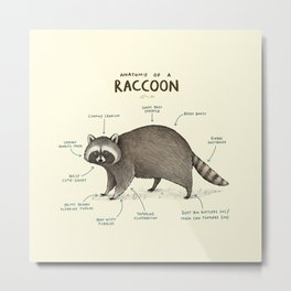 Anatomy of a Raccoon Metal Print