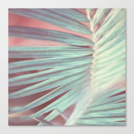 Tropical Leaf in Pink and Aqua Canvas Print