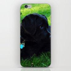 Angus iPhone & iPod Skin