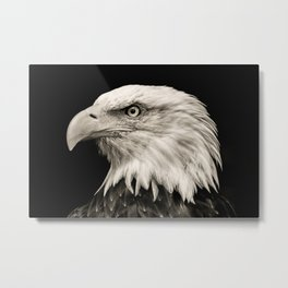American Eagle Photography | Bird | Metal Print