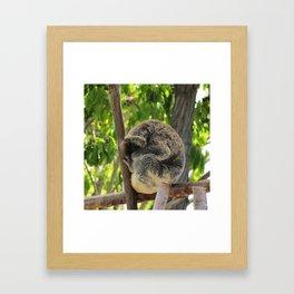 Sleeping Koala Framed Art Print
