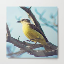 Yellow-Bellied Bird (Retro - Vintage Bird on blue sky) Metal Print