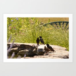 Starling Birds on Fountain Art Print