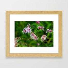 Japanese Burnet Framed Art Print
