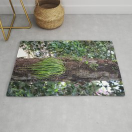 Epiphyte growth on tree in rainforest Rug