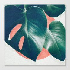 MONSTERA #1 Canvas Print