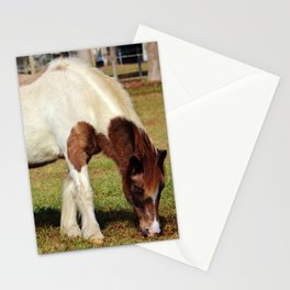 American Paint Horse Stationery Cards