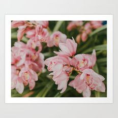 Ice-Cream Orchids Art Print