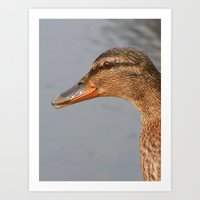 duck Art Prints featuring Duck by  Alexia Miles photography