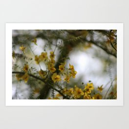 Closeup of Palo Brea Tree In Morning Sun Art Print