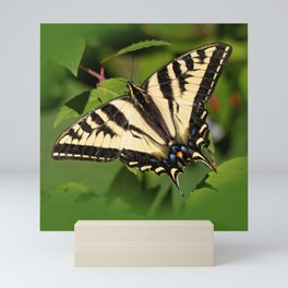 Western Tiger Swallowtail in the Garden Mini Art Print