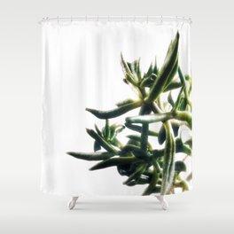 Jade - money plant - succulent in bright light Shower Curtain