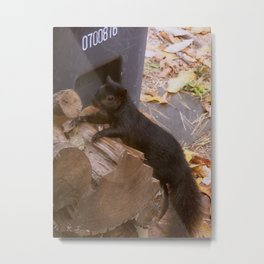 Snap through the window Metal Print