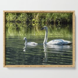 Cygnet with Father Serving Tray