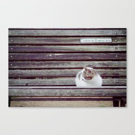 Cat, Osaka, Chair Canvas Print