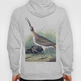 Hudsonian curlew, Birds of America, Audubon Plate 237 Hoody