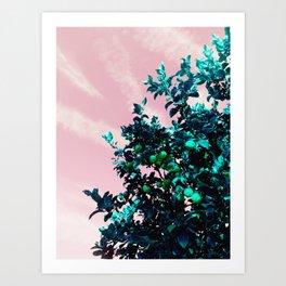 fairfax lemon tree Art Print