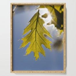 young oak foliage Serving Tray