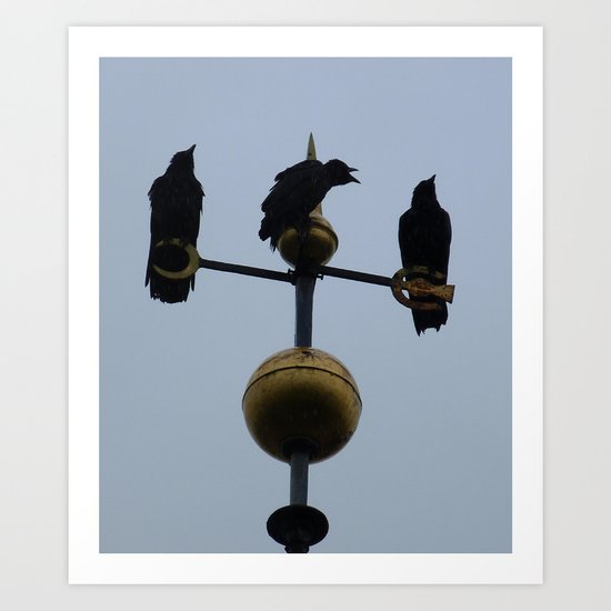 Scottish storm crows Art Print
