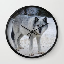 Lone wolf of the Canadian Rocky Mountains Wall Clock