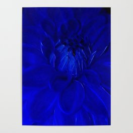 Royal Blue Fractal dahlia Poster