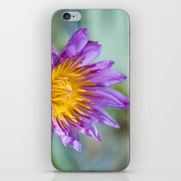 Blue Egyptian Water Lily 540 iPhone Skin