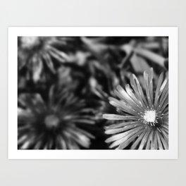 Flower in black Art Print