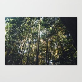 Bornean Jungle Canvas Print