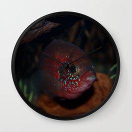 Jewel Cichlid- Red fish Wall Clock