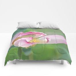 Aeolian Lotus Comforters