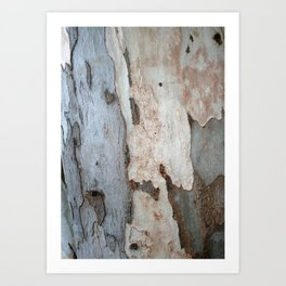 Bark Of A Eucalyptus Tree  Art Print