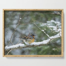 Male Varied Thrush, No. 2 Serving Tray