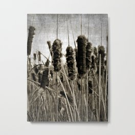 cattails Metal Print